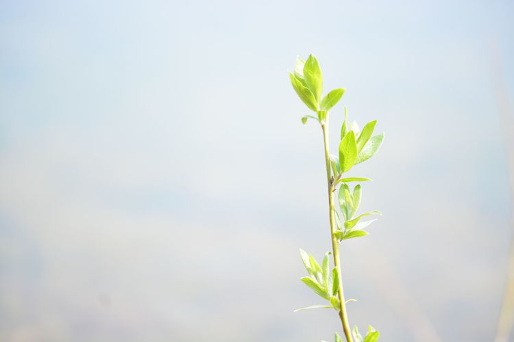 Plant Part Plant Leaf Nature Growth Close-up Green Color No People Beauty In Nature Day Freshness Outdoors Beginnings Copy Space Focus On Foreground Fragility New Life Vulnerability  Sunlight Food And Drink
