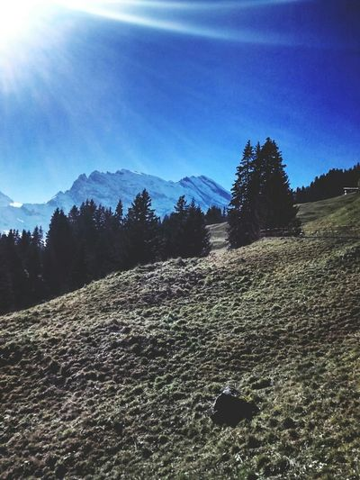 TreePorn Nature_collection Switzerland Bernese Oberland Blue Sky Mountains Landscape_Collection