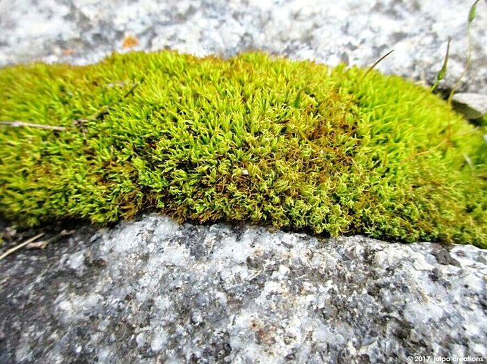 In between Green Color Close-up Growth Nature Onthefloor Lookingdown Life Inbetween Macro Macrophotography Macro Nature Macro_perfection Plant ADifferentWorld Moss Mossporn Different Perspective No People Day Plant Outdoors