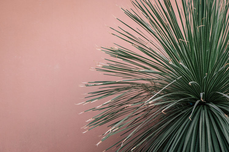 Hortus Botanicus Nature Day Plant Growth Tree Palm Tree No People Palm Leaf Leaf Beauty In Nature Tropical Climate Green Color Plant Part Close-up Outdoors Tranquility Low Angle View Wall - Building Feature Copy Space Pink Color Pine Tree Coniferous Tree Tropical Tree My Best Photo The Minimalist - 2019 EyeEm Awards