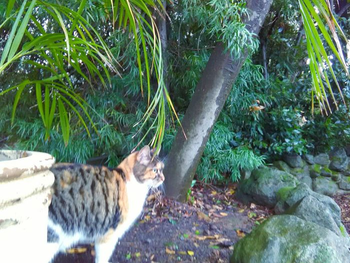 Trees Garden Photography Meditation Garden My Photography Pet Photography  Cat Zen Kitty Animal Photography My Point Of View Plants 🌱 Leaves🌿 Plant Photography Stones N Rocks