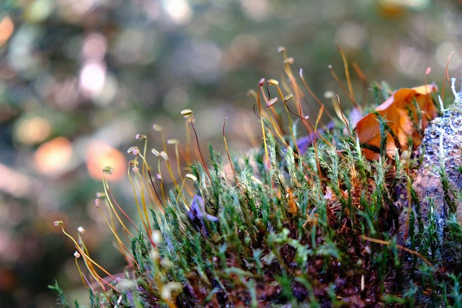 Lichen Moss & Lichen Beauty In Nature Focus On Foreground Green Color Moss Outdoors Plant Selective Focus Sunlight