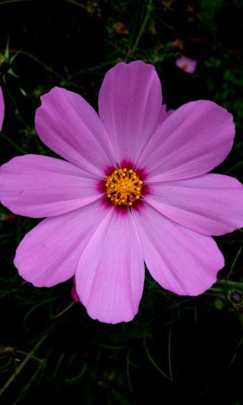 Juz gud 👌 ..... To 👀👀👌 Flowers,Plants & Garden Flower Beautiful Flowers good