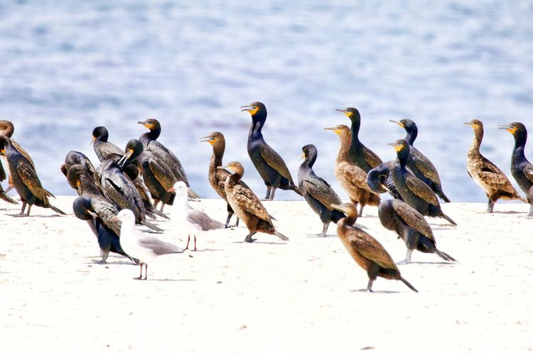 Animal Animal Wildlife Animals In The Wild Animal Themes Group Of Animals Bird Large Group Of Animals Nature Water Flock Of Birds Outdoors No People Cormorants Colony Of Cormorants