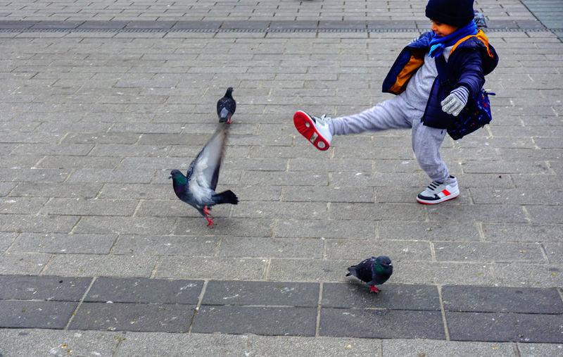 Bird Footpath