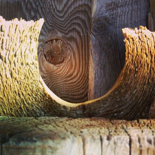 """Textures"" Popular Photographs Exceptional Photographs Textures In Nature Wooden Wood Grain Every Which Way Different Ways Different Points Of View Different Perspective Designs Designs In Nature EyeEm Selects Wood - Material Close-up Tree Ring Wood Grain Textured  Rough Rugged Timber Knotted Wood Cracked Uneven Hardwood This Is Natural Beauty"