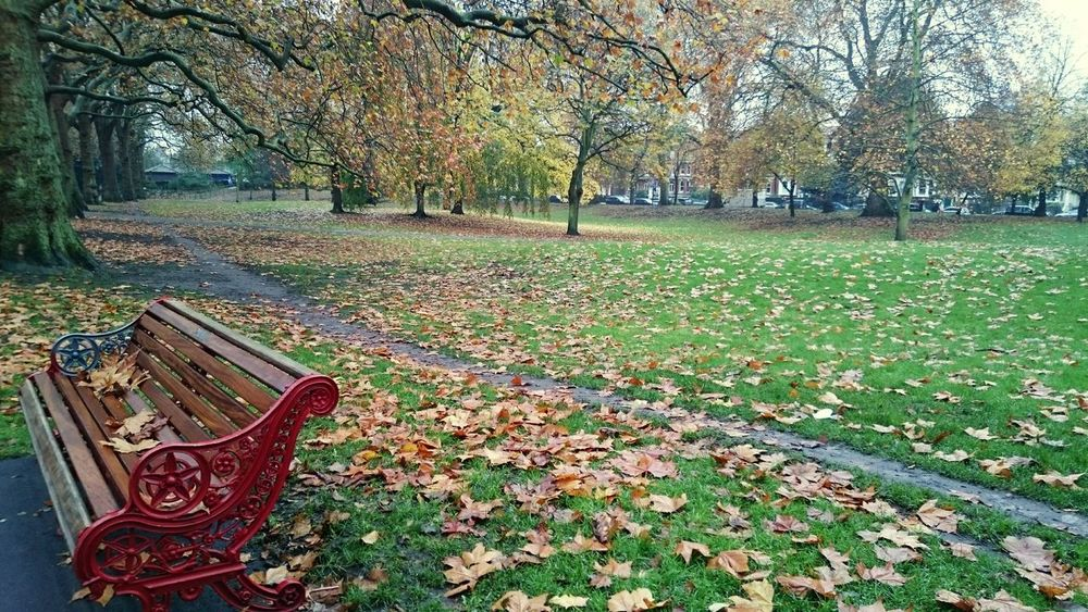 Beautiful afternoon at the park. Green Winter Bench Nature Falling Leaves Leaves Calmness Park Fall Colors Fall Trees Nature Colors