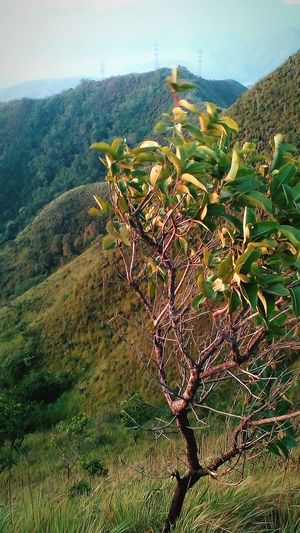 Nature Growth Beauty In Nature Tree No People Tranquility Outdoors Scenics Plant Sky Landscape Close-up Mountain View Atardecer Beauty In Nature Mountain Mountains Hills Day
