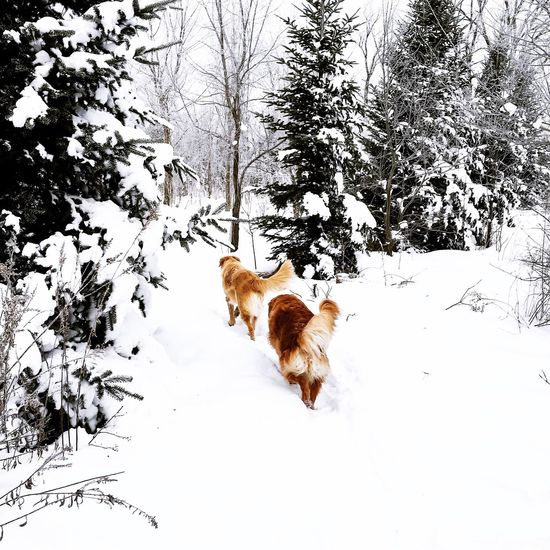 Follow the Leader Pet Photography  Dogs Walking Single File Dogs Life Dogs Dogs In Woods Woodlands Snowy Woods Snow Day Winter Time Winter Dogs Winter