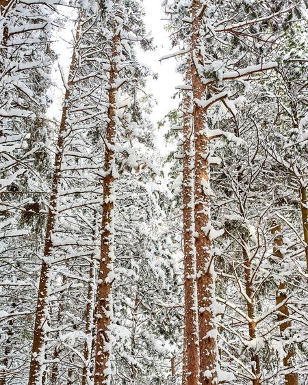 pine Snow ❄ Winter Forest Photography Reimerpics Landscapes Snowing Nature Ontario Photoftheday Loreeforest Photo Foto Followme Follow Photography Backgrounds Pattern Abstract Indoors  Day