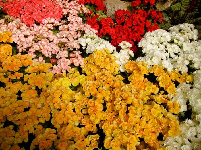 Full frame shot of fresh white flowers