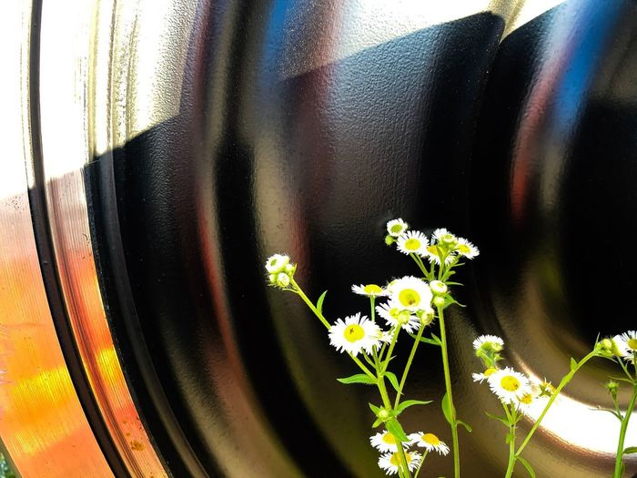 Train and nature EyeEmNewHere EyeEm Selects EyeEm Gallery EyeEm Best Shots Flower Flowering Plant Plant Close-up Freshness No People Nature Fragility Transportation Indoors  Vulnerability  Window Glass - Material Day Beauty In Nature Transparent Growth Flower Head Flower Arrangement