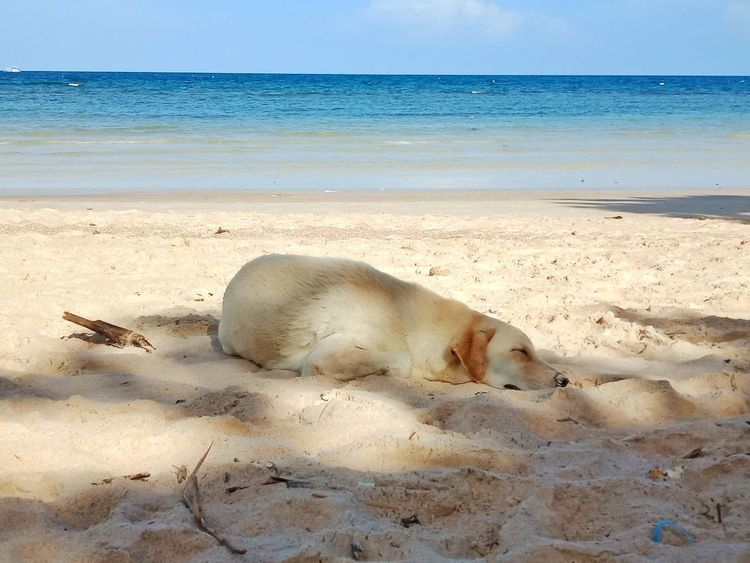dog sweet dream on the beach Water Sea Beach Sea Life Sand Sky Horizon Over Water First Eyeem Photo