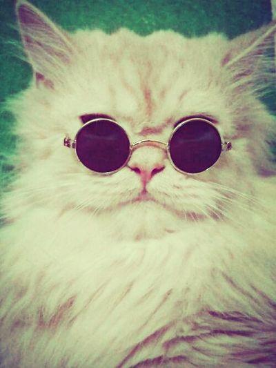 Cat Catretro Retro