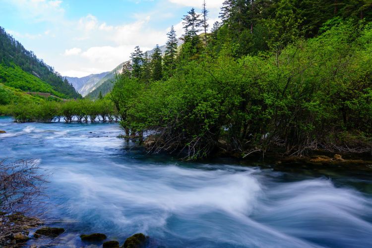 Scenic view of river stream amidst trees in forest against sky
