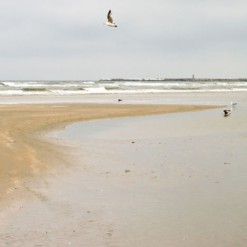 Flights Bird And Beach Bird And Beach Scape Nature Sand And Sea Patterns Water