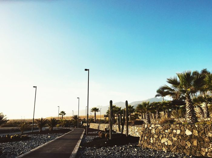 desert Sky Street Clear Sky Tree Nature Street Light Transportation Plant Day Outdoors Road No People