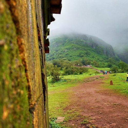 Nature Trek Anjanery Nashik nasik temple mountain hills mountains rain monsoon raindrops fog devlali deolali instadaily nashikgram maharashtra india climbing @maharashtra_ig @nashikgram @natgeotravellerindia @natgeo