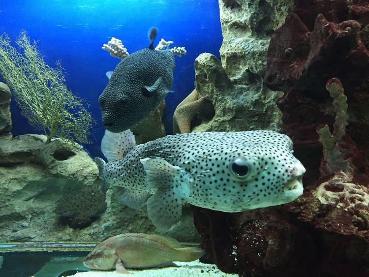 рыбки Fish океанариум Сочи Sochi