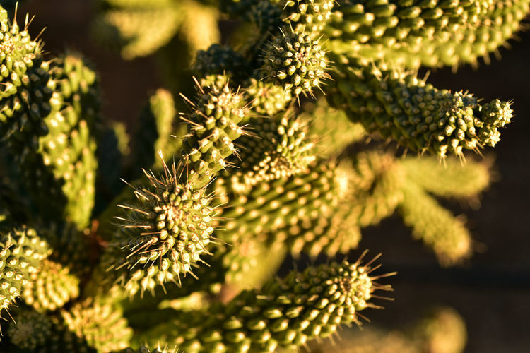 close up detail of spiky green cactus plant Cactus Cactus Garden Desert Life Nature Cactus Fruit Close Up Detail Detail Of Nature Green Cactus Spiky Plant Thorny Cactus