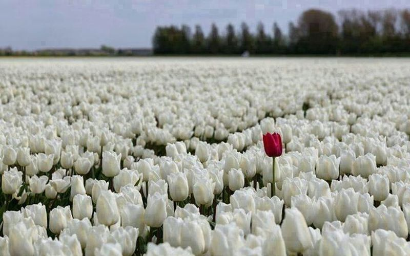 Sometimes you need to be different.