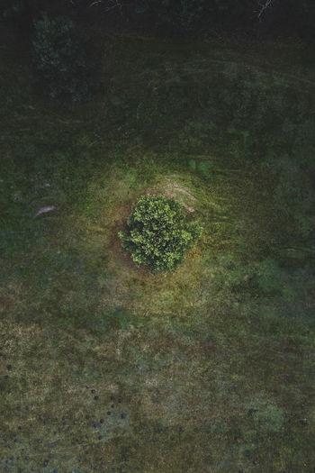 Full frame shot of moss on land