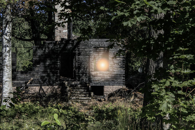 The ghost of the burning house ©️JaniVauhkonen Tree Outdoors No People Sun Nature Sunlight Growth Day Built Structure Branch Architecture Sky The Week On EyeEm JaniVauhkonen Canon EOS 600D
