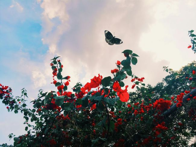 After a long break. Im back. Im not a nature photographer, but nature sometimes has this way of surprising me at the right time. Nature Flowers Sky Butterfly
