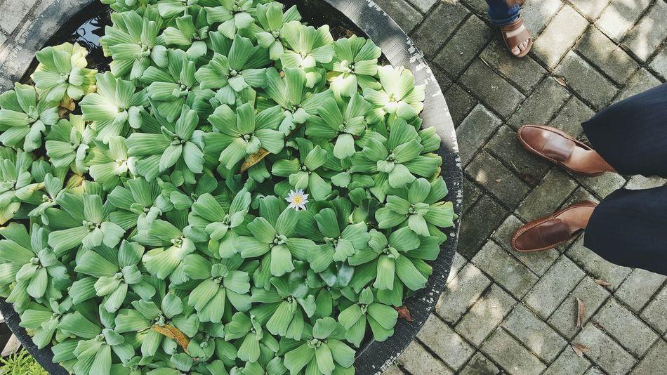 Plant Plants Water Plants Pond Feet Foot Paving Stone Sandals Green Floral Showcase July Nature Planter Planter Pot