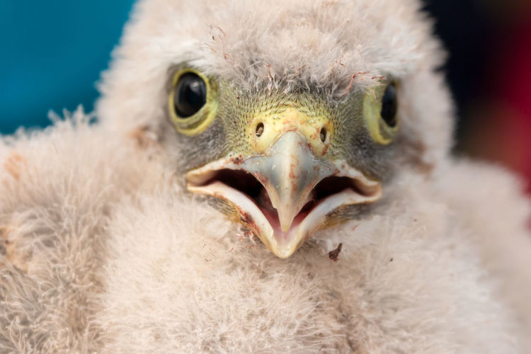 Close-up portrait of young bird