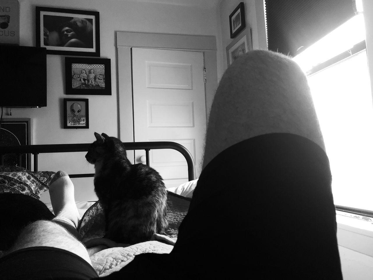 CAT SITTING IN BEDROOM