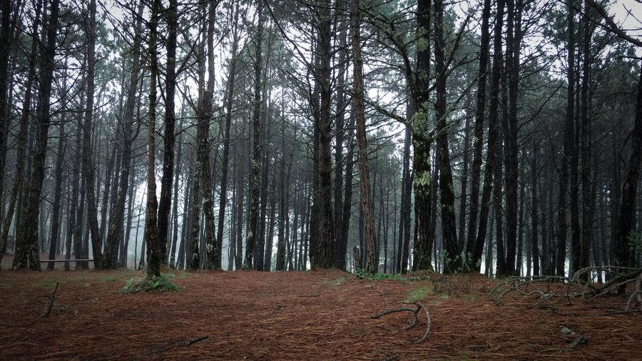 Eden... Tree