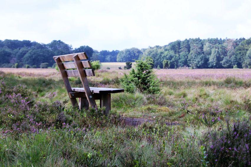 Lüneburger Heide Nature Bank Holiday Beauty In Nature Day Field Grass Landscape Lüneburgerheide Nature No People Outdoors Pause Plant Scenics Seat Sitz Sky Tree