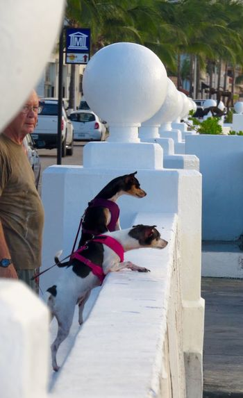 Cozumel Mexico Dogs People Traveling Taking Photos