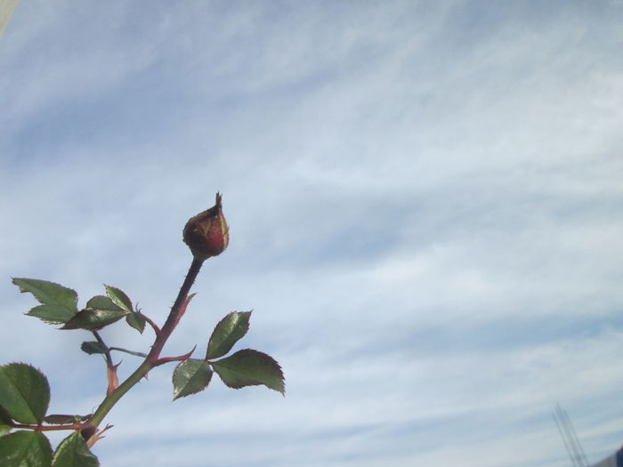 Low angle view of fruit growing on tree against sky