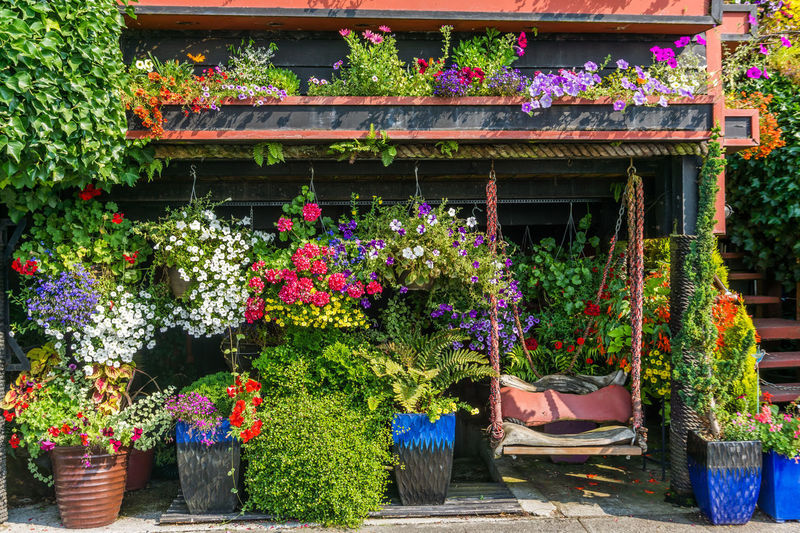 Potted flowers in front of a house in West Seattle, Washington. Home Architecture Beauty In Nature Building Building Exterior Built Structure Choice Day Flower Flower Pot Flowering Plant Freshness Gardening Growth Hangingbasket Multi Colored Nature No People Outdoors Plant Potted Plant Variation Vulnerability  West Sea