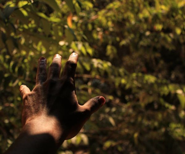 Reaching Out Reachingfornature Reaching Out To Nature Naturecalls Nature Calls Nature Green Expressive