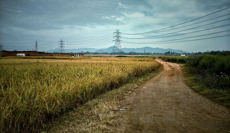 Electricity  Electric Wires Electric Tower  Rural Field Fields And Sky Crop Field Crops Rice Field Rice Grain Rural Scene Landscape Cloud - Sky Agriculture Connection Fuel And Power Generation Outdoors Nature Transmission Line Tower Transmission Wire Transmission Transmissionlines Village Scene Rural Road Destination