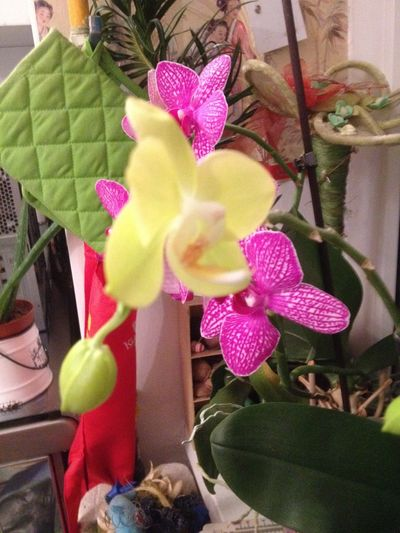 Orchids Orchid