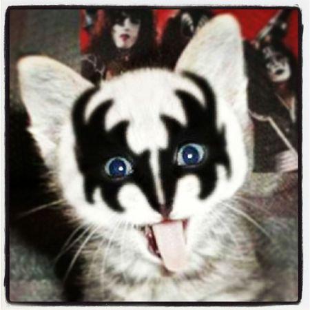 The Cat of thunder, Mr. love'em, leave'em. Kiss Gene Simmons Makeup