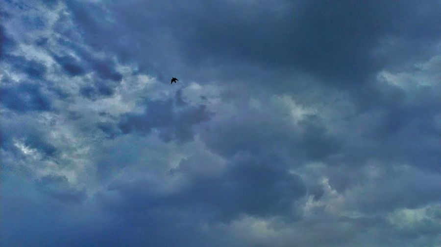 One Bird Flying High Angle View Sky And Clouds Colors Nature Photography Flying High Beautiful Day No People Animal Themes Animal Photography Fantastic Beauty In Nature EyeEm Nature Lover Bird Flying Bird Of Prey Sky Only Mid-air Cloudscape Storm Cloud Sky Cloud - Sky