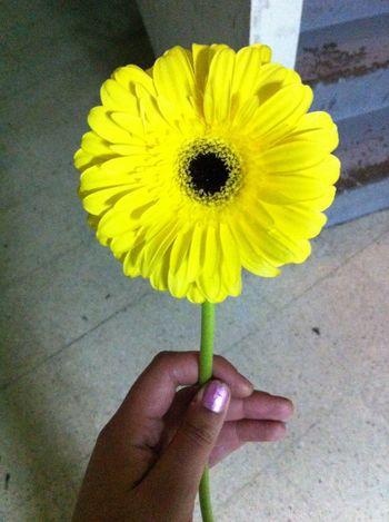 A veces la vida me manda flores. Nice Day Details Love My Job Flowers