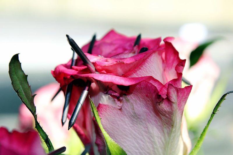 Petals and