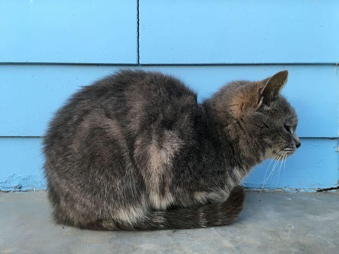 Cat Cats Blue Cute Okc Oklahoma City Porch Life Gray Gray Cats Jeff