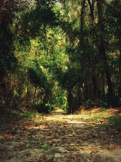 A Hidden Path in the Woods . Tree Forest Nature Tranquility Beauty In Nature The Way Forward Tranquil Scene Growth Day Scenics Landscape No People Outdoors Autumn Leaf Trees Trail