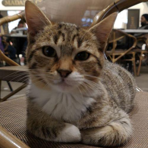 Cat Cats Cat♡