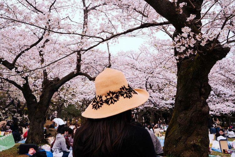 Urban Spring Fever Japan Sakura Telling Stories Differently