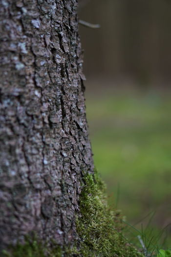 Close-up of tree trunk on field