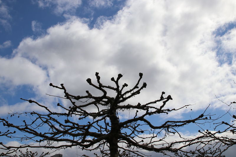Beauty In Nature Buitifull Close-up Cloud - Sky Copenhagen Day Denmark EyeEm Best Shots EyeEm Gallery EyeEm Nature Lover Fotoart Love Low Angle View Nature No People Outdoors Sky Spring Springtime Tree
