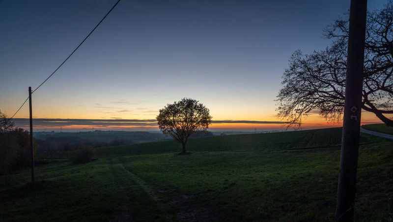 Sky Sunset Tree Plant Landscape Environment Tranquility Field Scenics - Nature Tranquil Scene Beauty In Nature Land Nature No People Non-urban Scene Idyllic Grass Rural Scene Growth Orange Color Outdoors